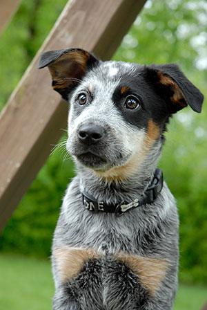 Puppy/Dog Obedience Classes – Spring 2018